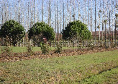 plantation-haie-vive-06